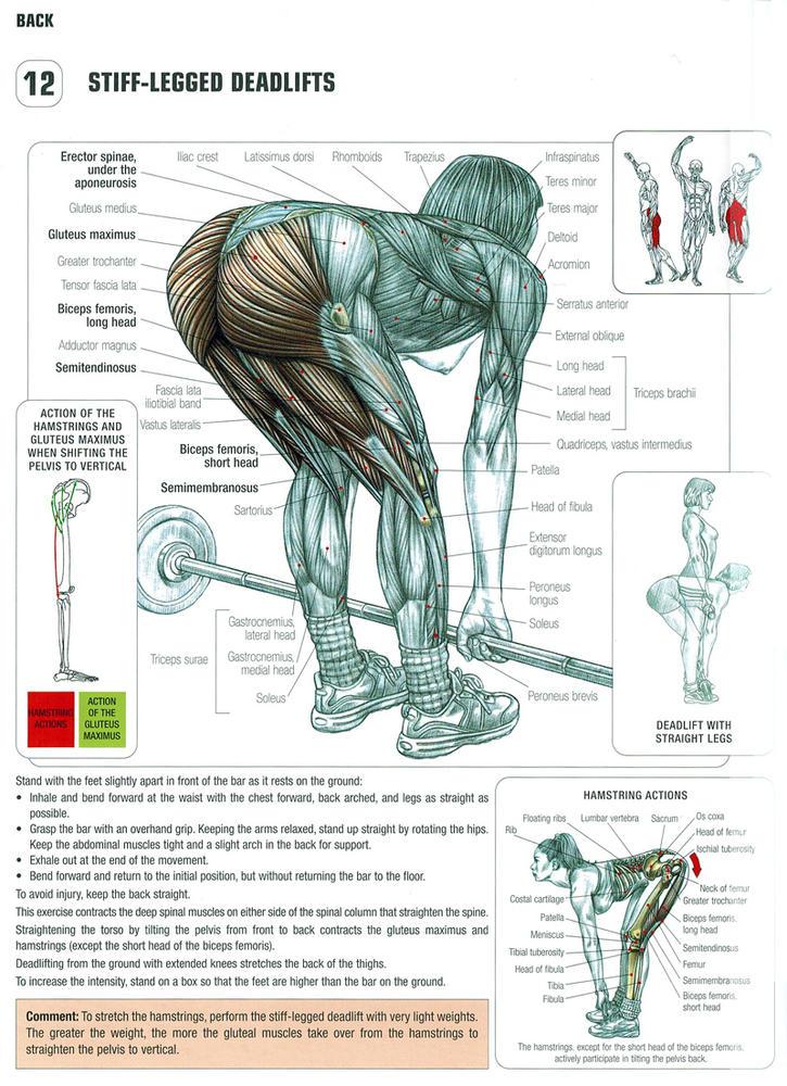 Комплекс упражнений на все группы мышц в домашних условиях 51