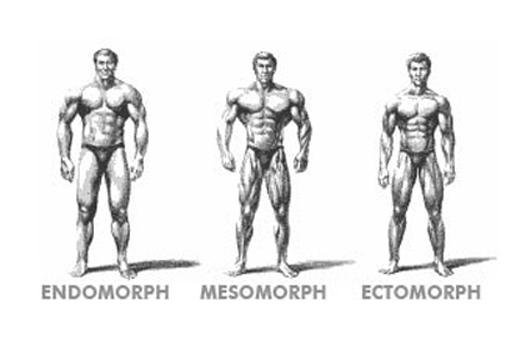 Ectomorph Endomorph And Mesomoprh