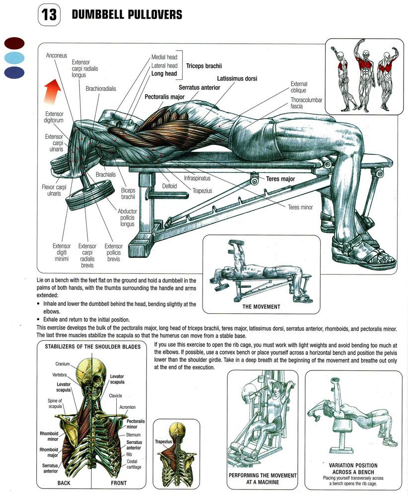 Frederic Delavier Strength Training Anatomy Choice Image - human ...